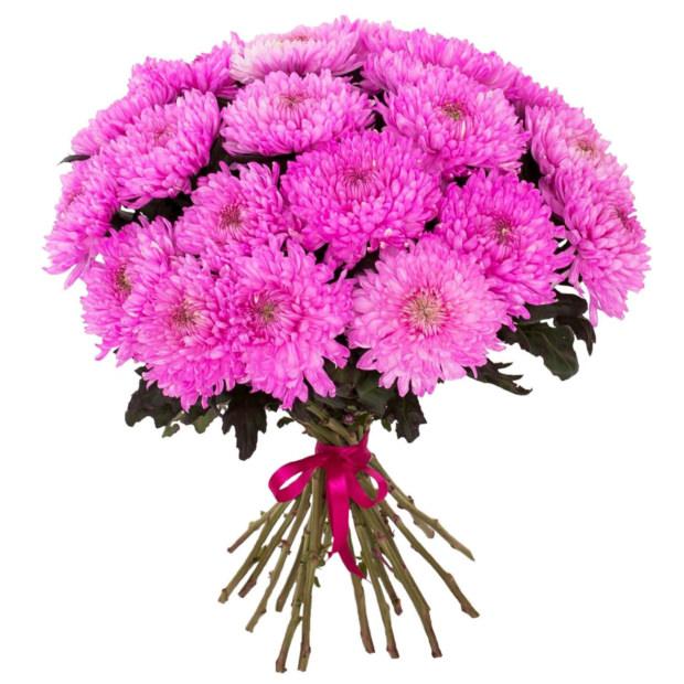 Хризантема одноголовая розовая